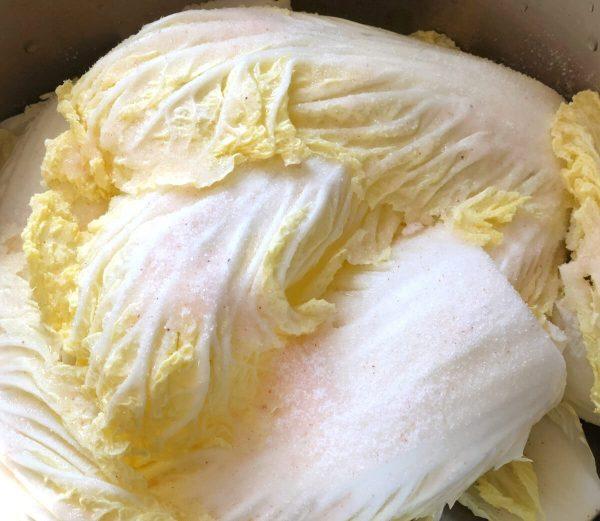 napa cabbage salt