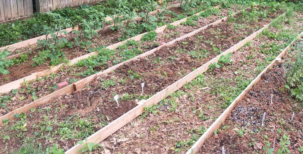 Raised Bed Vegetable Garden On A Slope, How To Build A Raised Garden Box On Slope