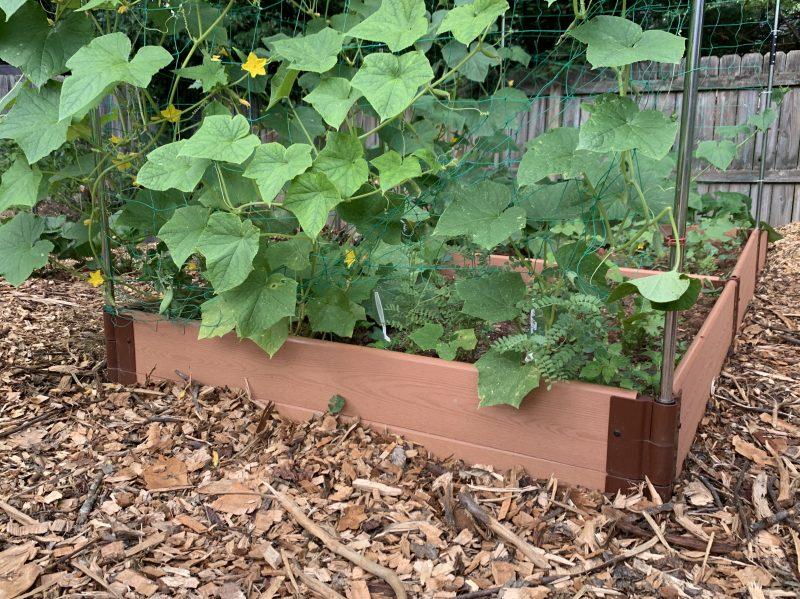 wood mulch in garden
